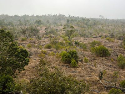 Kona Sandalwood Reforestation Project – Big Island, Hawaii, USA