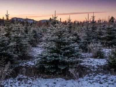 Highland Flats Tree Farm and Distillery – Naples, Idaho, USA