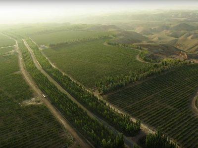 Ningxia Wolfberry Farm and Distillery – NingXia, China