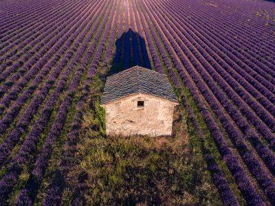 Simiane-la-Rotonde Lavender Farm and Distillery – Simiane-La-Rotonde, France