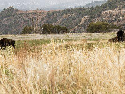 Skyrider Wilderness Ranch – Tabiona, Utah, USA